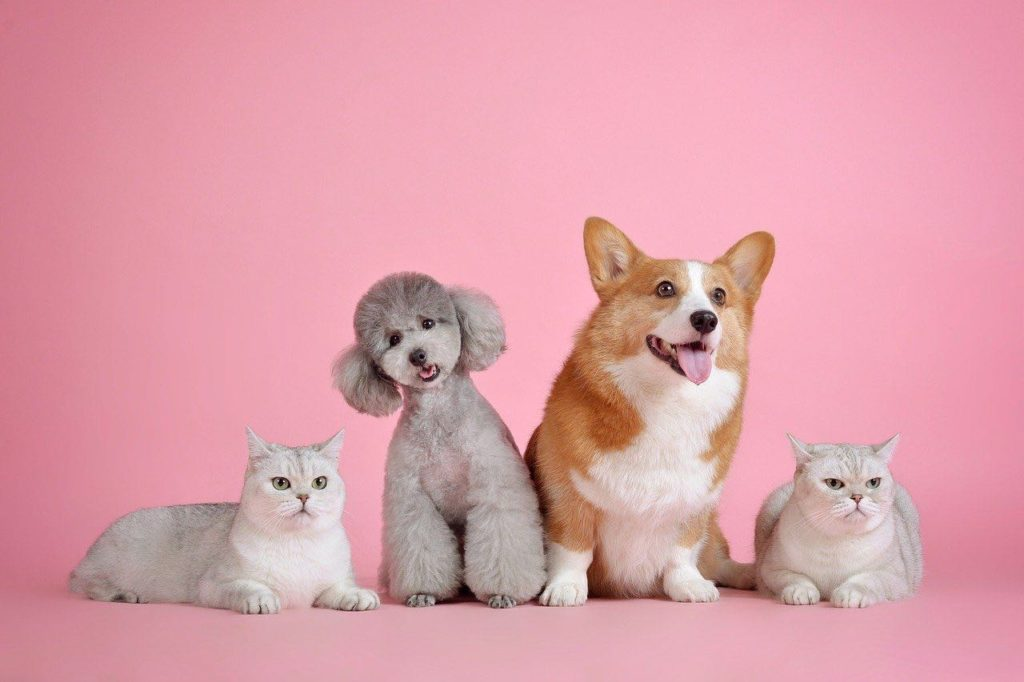 chient chat animaux domestiques